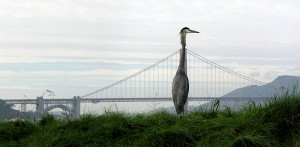 bird and bay bridge